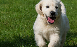 Co nás o lásce mohou naučit psi